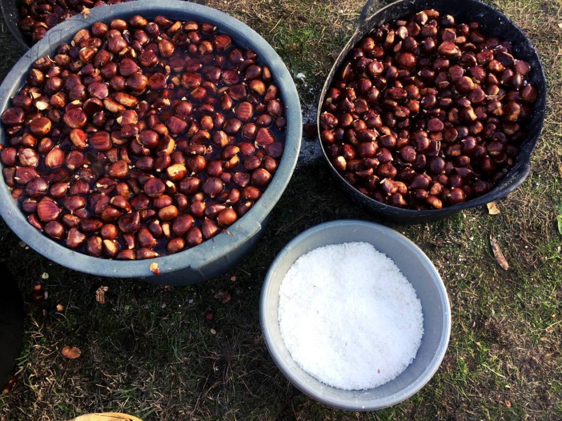 Flaczki z olejem - Magusto - kasztany