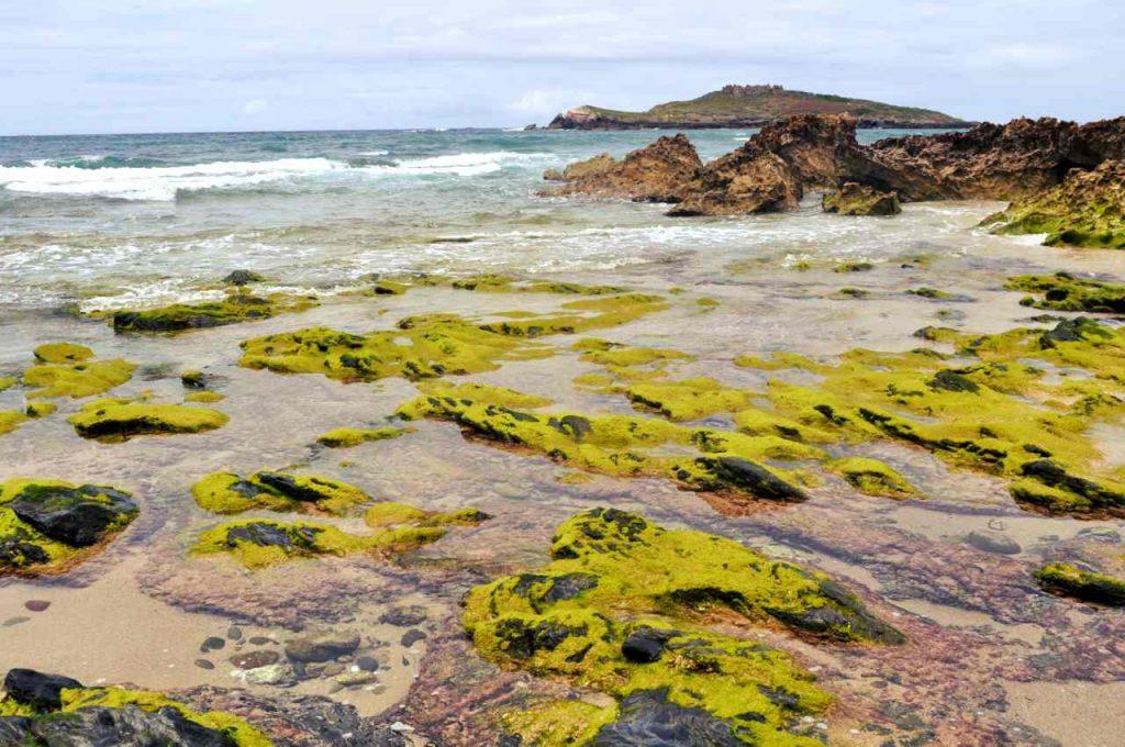 Plaże Costa Alentejana - Praia da Ilha do Pessegueiro - algi