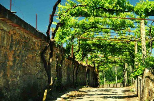 Zielone wino portugalskie - vinho verde