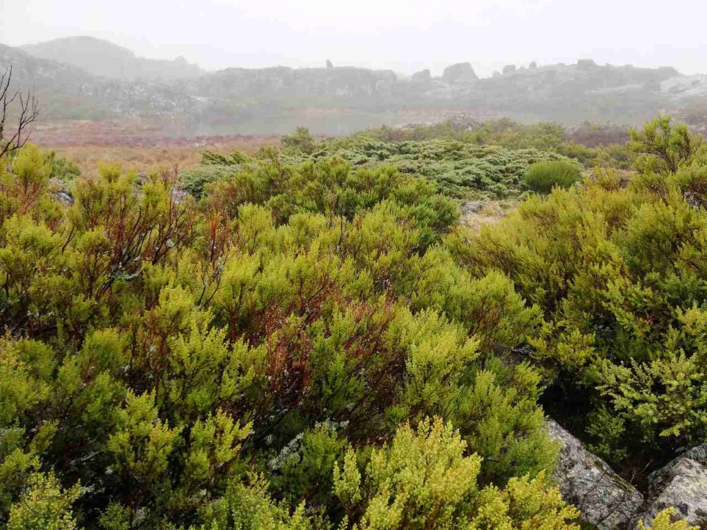 Covão dos Conchos - zieleń na szlaku
