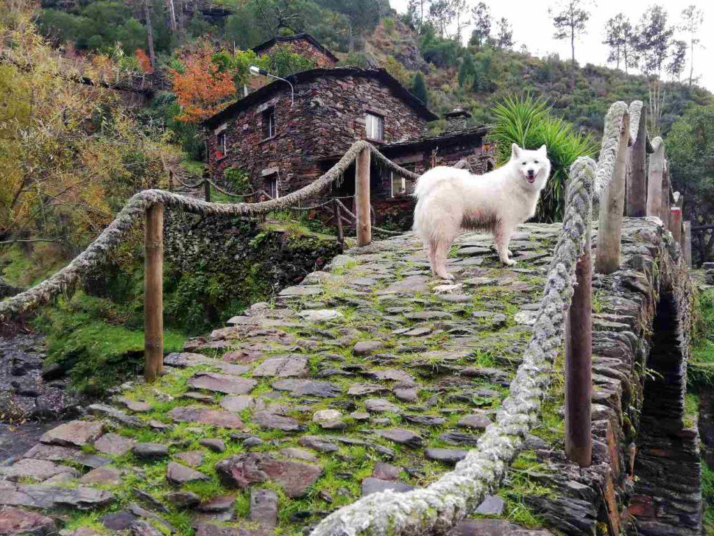Foz d'Égua -Portugalia z psem